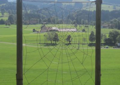 Die Spinne auf dem Skulpturenweg